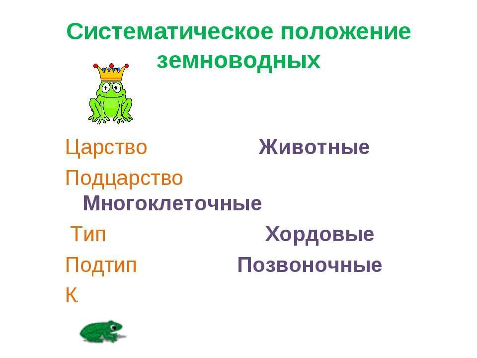 Систематическое положение земноводных Царство Животные Подцарство Многоклеточ...