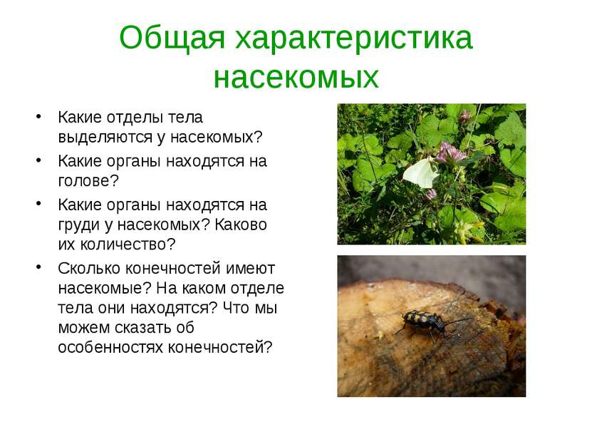 Общая характеристика насекомых Какие отделы тела выделяются у насекомых? Каки...