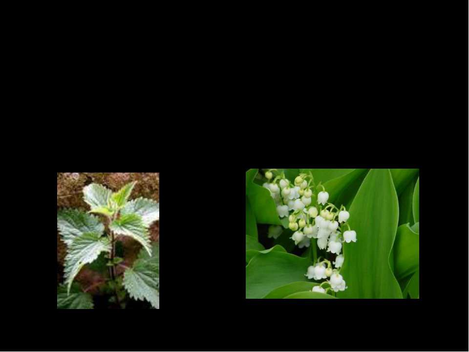 Какие ещё растения растут в лесу вы ответите отгадав загадки. Прикоснёшься - ...