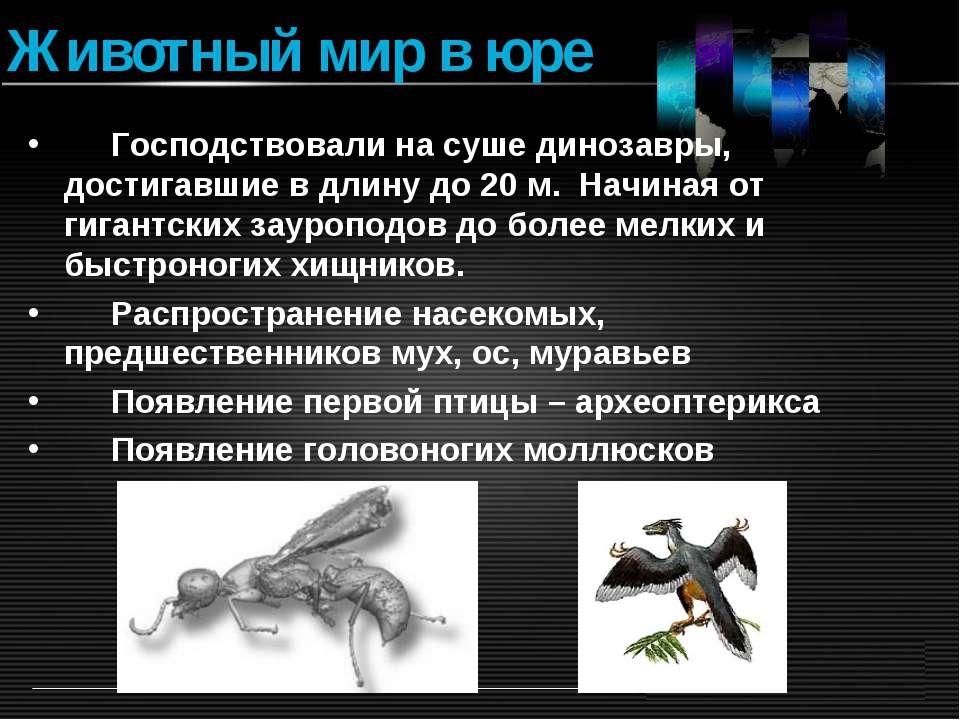 Животный мир в юре Господствовали на суше динозавры, достигавшие в длину до 2...