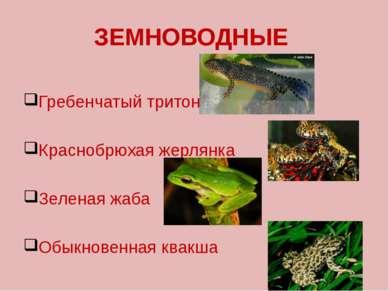 ЗЕМНОВОДНЫЕ Гребенчатый тритон Краснобрюхая жерлянка Зеленая жаба Обыкновенна...