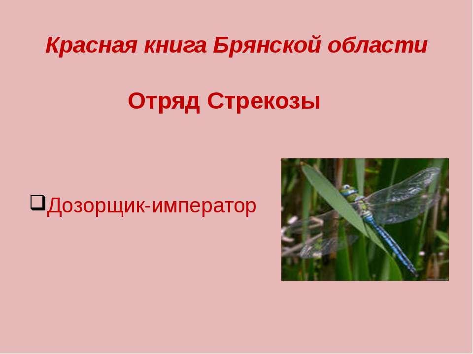 Красная книга Брянской области Отряд Стрекозы Дозорщик-император