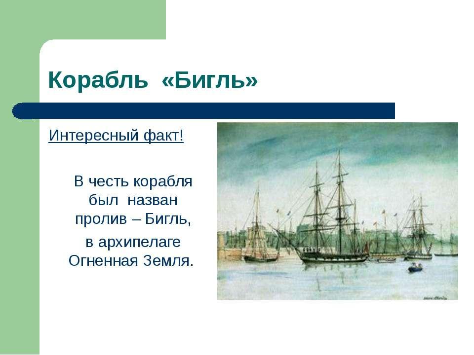 Корабль «Бигль» Интересный факт! В честь корабля был назван пролив – Бигль, в...