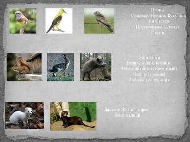 Птицы Соловей, Иволга, Кукушка питаются Насекомыми. И поют Песни. Животные Бе...