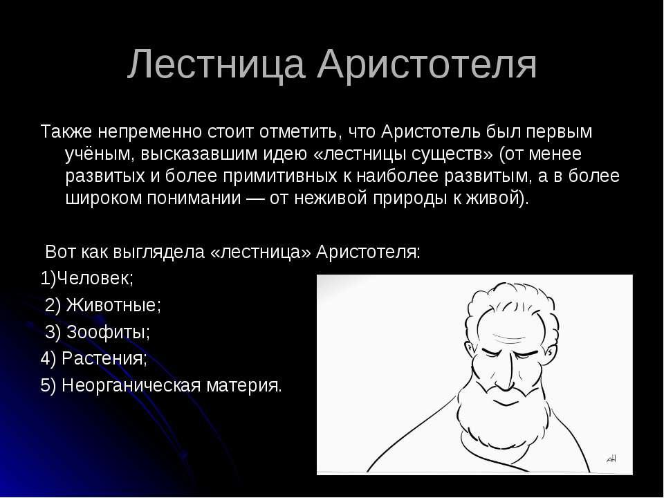 Лестница Аристотеля Также непременно стоит отметить, что Аристотель был первы...