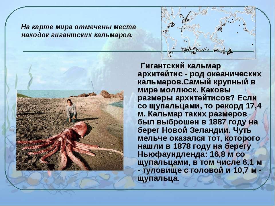 Гигантский кальмар архитейтис - род океанических кальмаров.Самый крупный в ми...