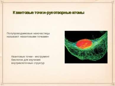 Квантовые точки-рукотворные атомы Полупроводниковые наночастицы называют «ква...