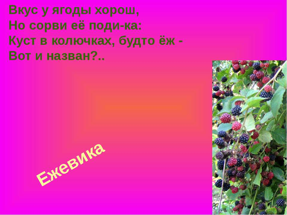 Ежевика Вкус у ягоды хорош, Но сорви её поди-ка: Куст в колючках, будто ёж - ...
