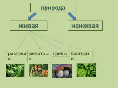 растения животные грибы бактерии