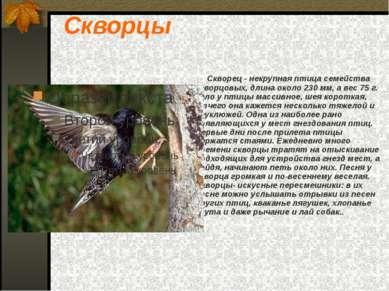 Скворцы Скворец - некрупная птица семейства скворцовых, длина около 230 мм, а...