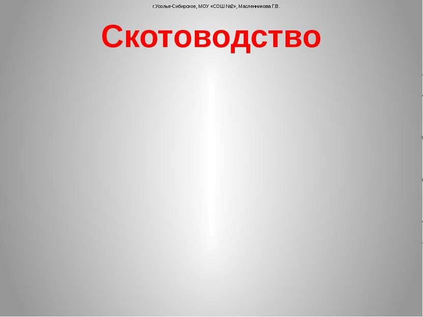Скотоводство г.Усолье-Сибирское, МОУ «СОШ №2», Масленникова Г.В.