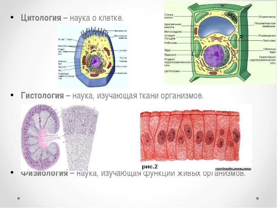 Цитология – наука о клетке. Гистология – наука, изучающая ткани организмов. Ф...