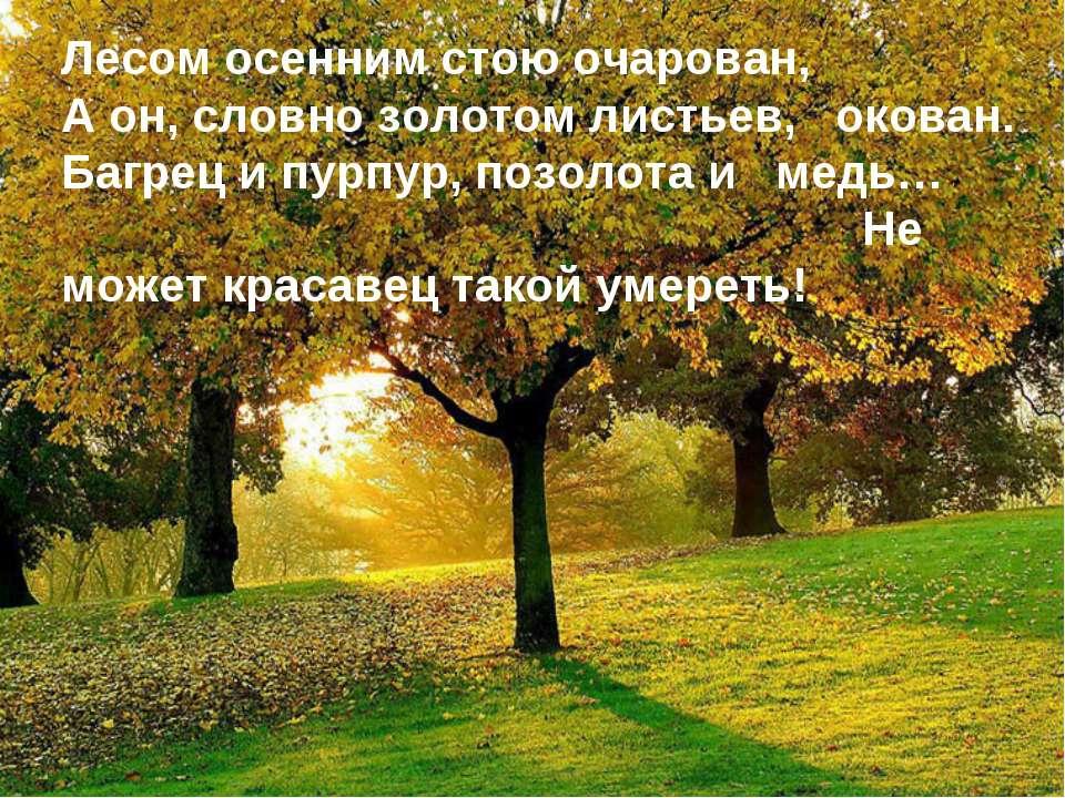 Лесом осенним стою очарован, А он, словно золотом листьев, окован. Багрец и п...