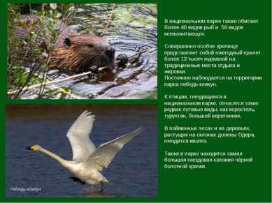 В национальном парке также обитают более 40 видов рыб и 50 видов млекопитающи...