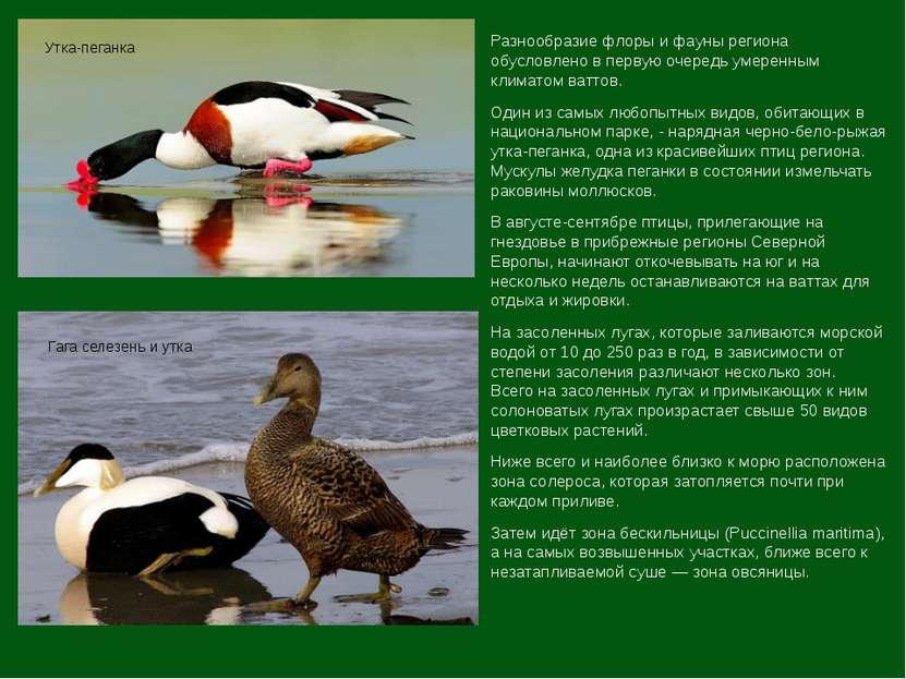 Разнообразие флоры и фауны региона обусловлено в первую очередь умеренным кли...