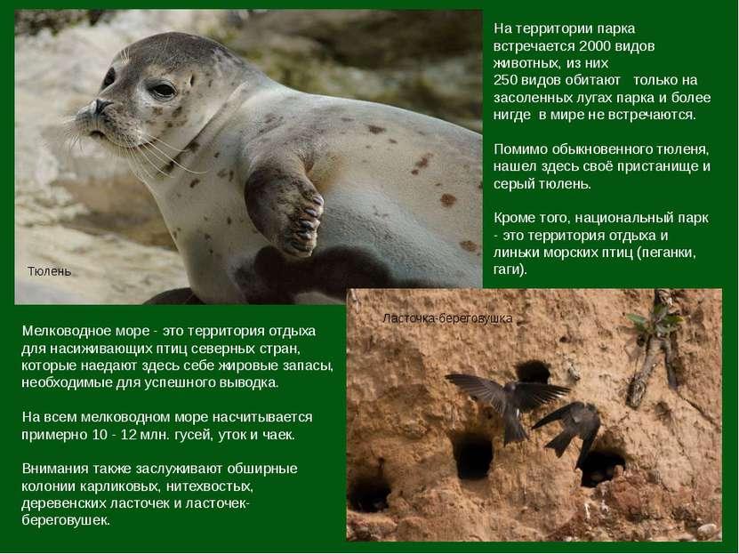 На территории парка встречается 2000 видов животных, из них 250 видов обитают...