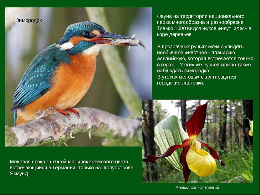 Фауна на территории национального парка многообразна и разнообразна. Только 1...