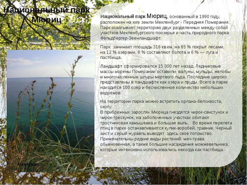 Национальный парк Мюриц, основанный в 1990 году, расположен на юге земли Мекл...