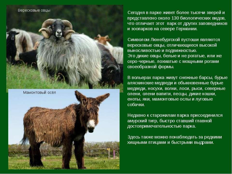 Сегодня в парке живет более тысячи зверей и представлено около 130 биологичес...