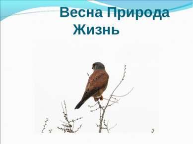 Весна Природа Жизнь