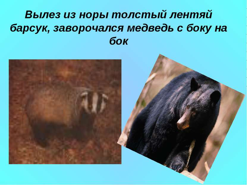 Вылез из норы толстый лентяй барсук, заворочался медведь с боку на бок