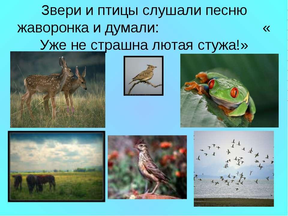 Звери и птицы слушали песню жаворонка и думали: « Уже не страшна лютая стужа!»