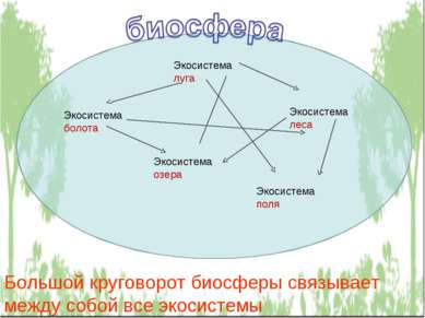 Экосистема луга Экосистема болота Экосистема леса Экосистема озера Экосистема...