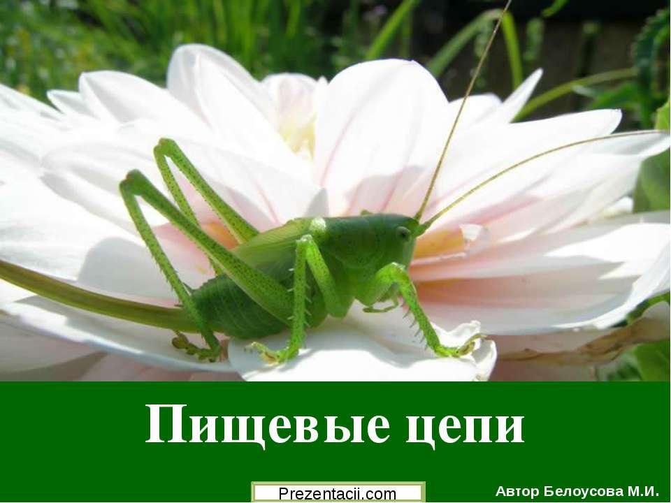 Пищевые цепи Автор Белоусова М.И.