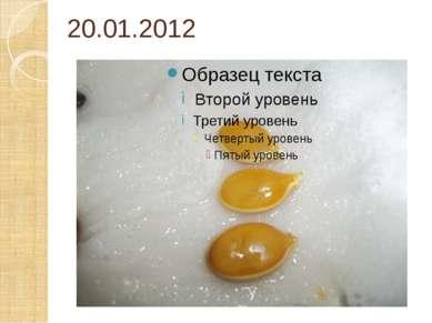 20.01.2012
