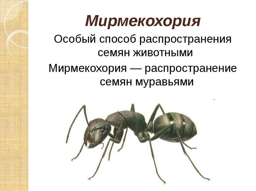 Мирмекохория Особый способ распространения семян животными Мирмекохория — рас...