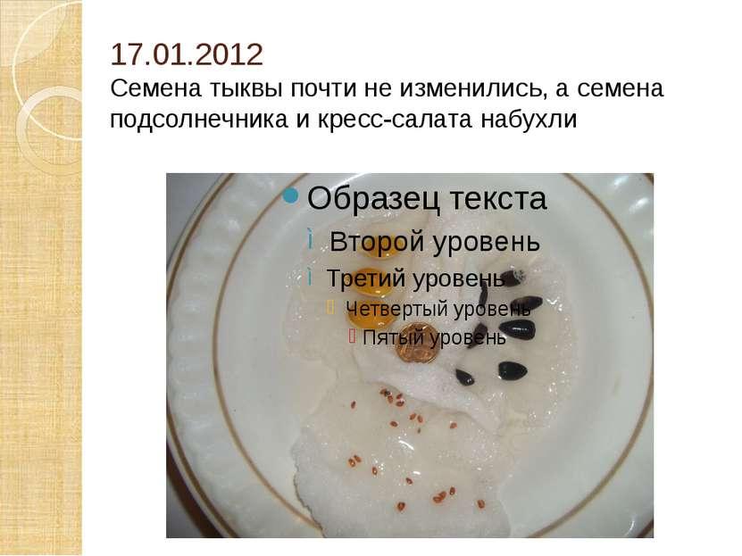 17.01.2012 Семена тыквы почти не изменились, а семена подсолнечника и кресс-с...