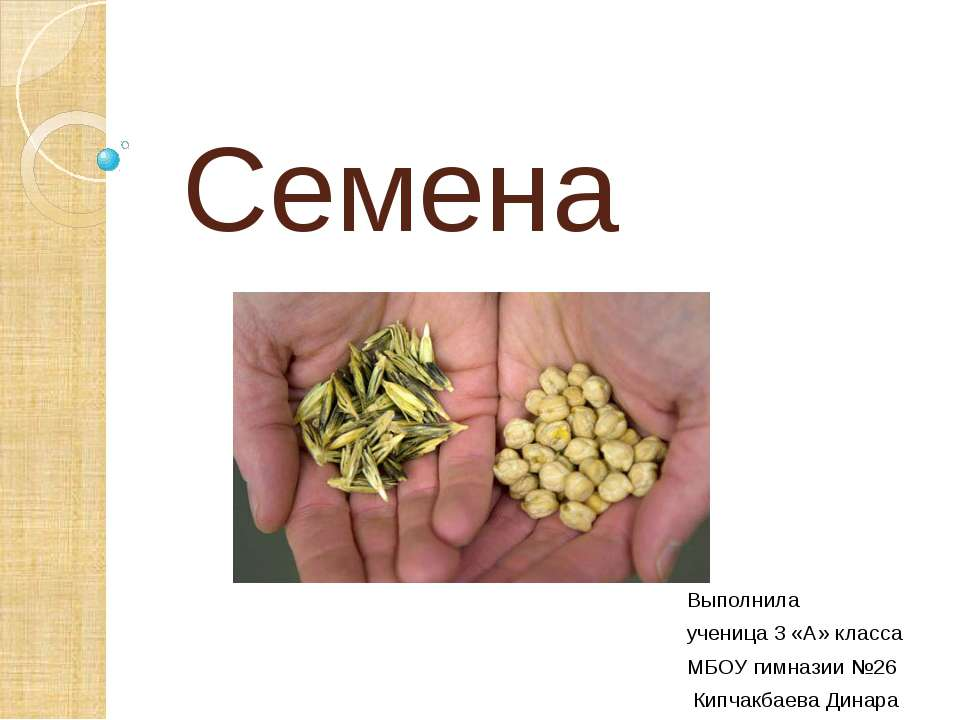 Семена Выполнила ученица 3 «А» класса МБОУ гимназии №26 Кипчакбаева Динара