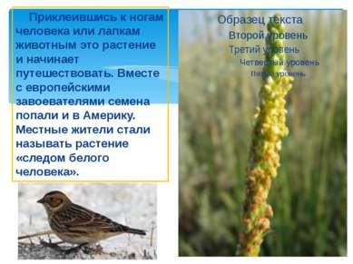 Приклеившись к ногам человека или лапкам животным это растение и начинает пут...