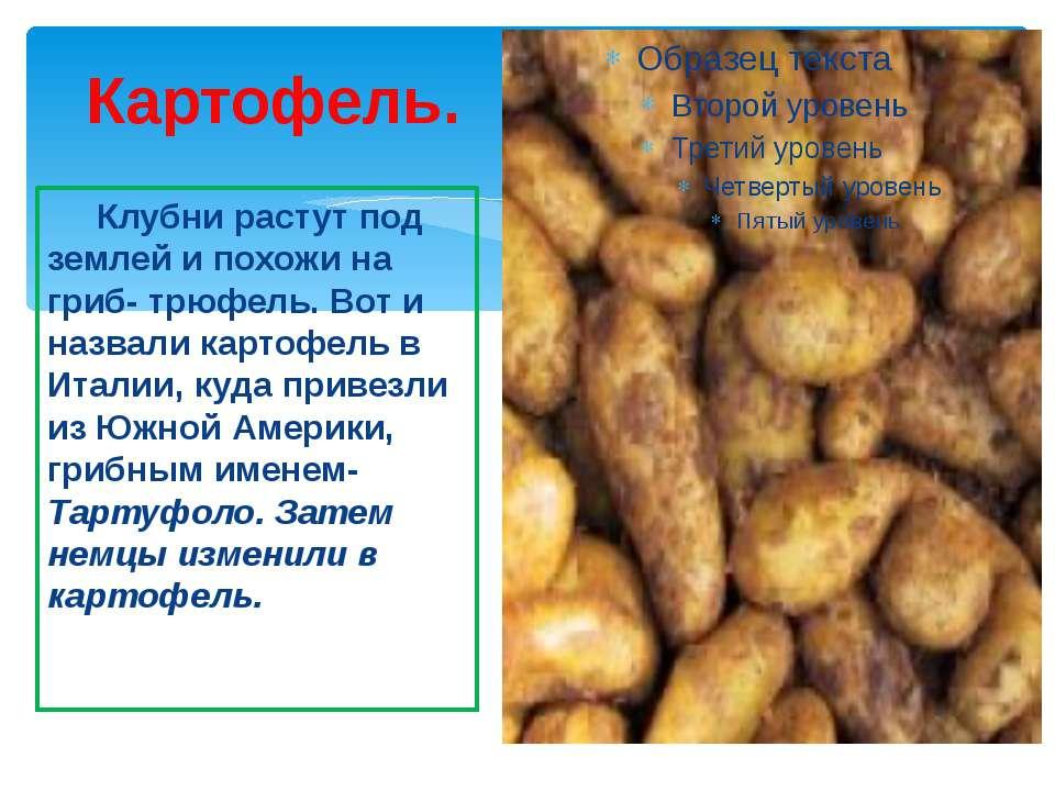 Картофель. Клубни растут под землей и похожи на гриб- трюфель. Вот и назвали ...