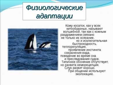 Кожу косаток, как у всех китообразных, называют волшебной, так как с кожным р...
