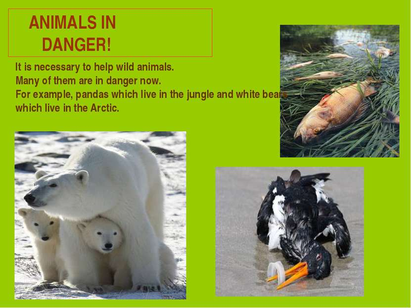 ANIMALS IN DANGER! It is necessary to help wild animals. Many of them are in ...