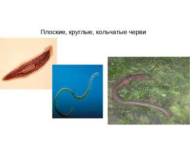 Плоские, круглые, кольчатые черви