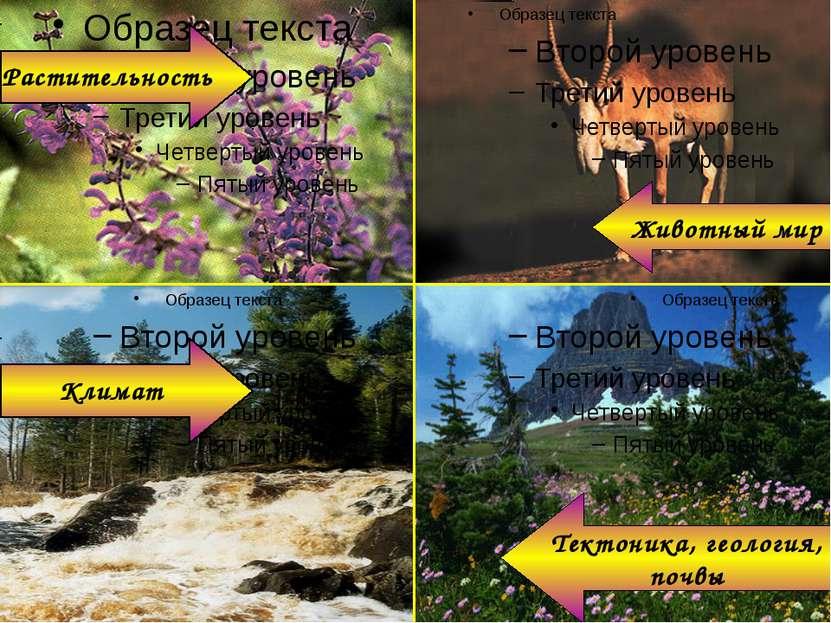 Растительность Климат Животный мир Тектоника, геология, почвы