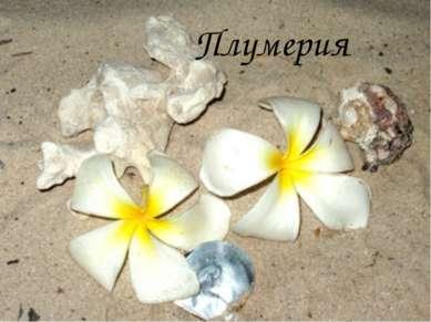 Плумерия