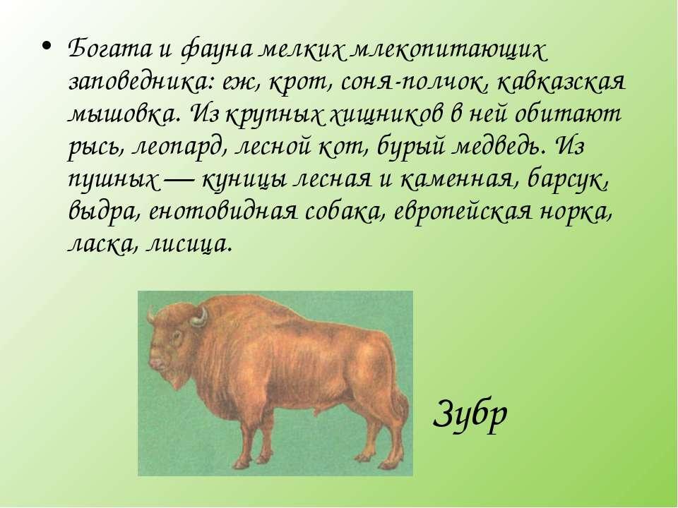 Зубр Богата и фауна мелких млекопитающих заповедника: еж, крот, соня-полчок, ...
