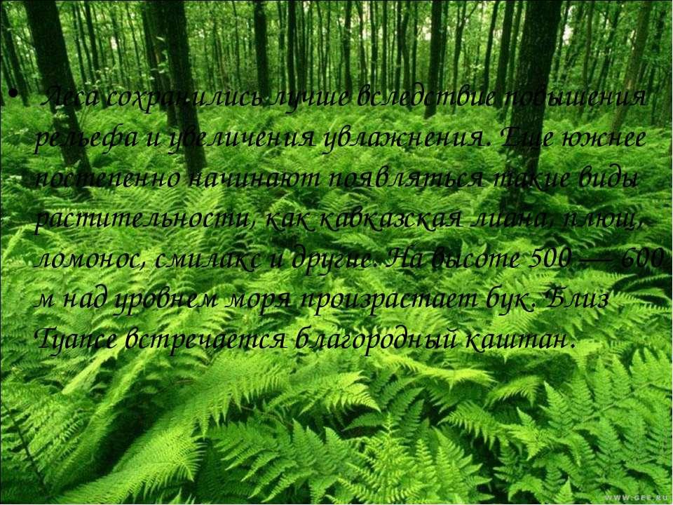 Леса сохранились лучше вследствие повышения рельефа и увеличения увлажнения. ...