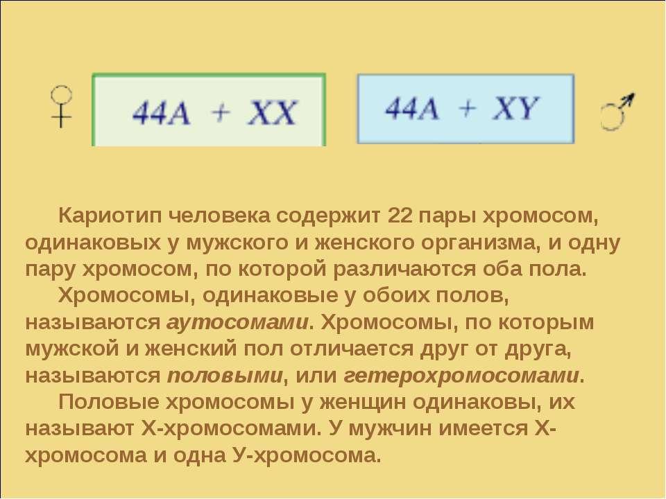 Кариотип человека содержит 22 пары хромосом, одинаковых у мужского и женского...