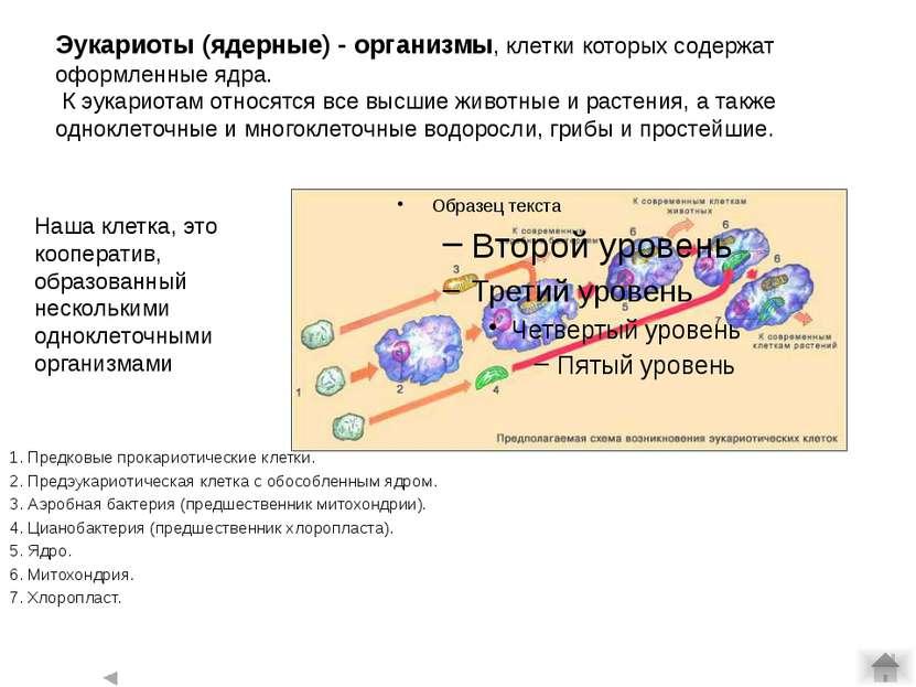 Ранний докембрий: возникновение эукариотности. гипотеза симбиогенеза: аналоги...