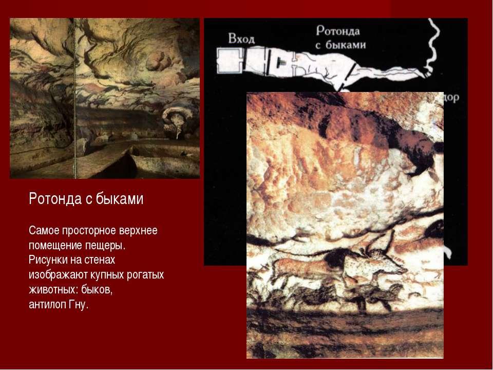 Ротонда с быками Самое просторное верхнее помещение пещеры. Рисунки на стенах...