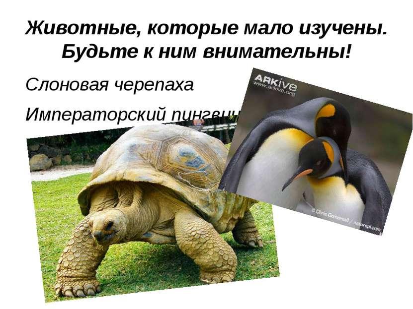 Животные, которые мало изучены. Будьте к ним внимательны! Слоновая черепаха И...