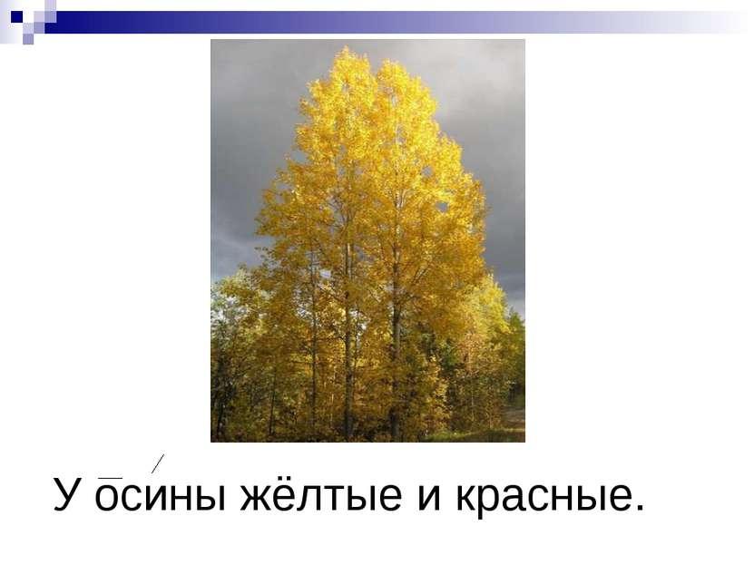 У осины жёлтые и красные.
