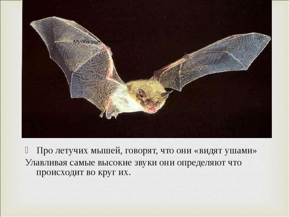 Про летучих мышей, говорят, что они «видят ушами» Улавливая самые высокие зву...