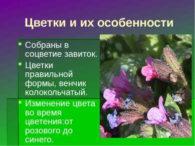 Цветки и их особенности Собраны в соцветие завиток. Цветки правильной формы, ...