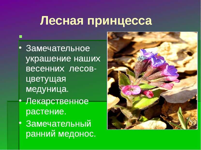 Лесная принцесса Замечательное украшение наших весенних лесов- цветущая медун...