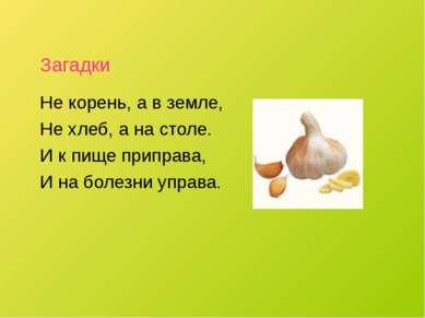 Загадки Не корень, а в земле, Не хлеб, а на столе. И к пище приправа, И на бо...